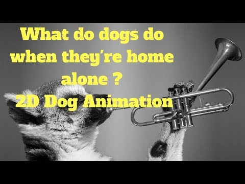 What do dogs do when they're home alone ?  2D Dog Animation