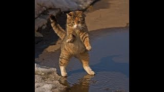 Стих Дикарка. Автор Агния Барто. Стих про кошку.