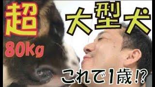 番組提供:ペットライン株式会社 http://www.petline.co.jp/ 今回から心...