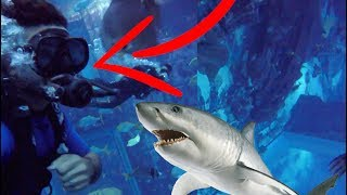 I CAN'T BELIEVE I DID IT!!! SWIMMING WITH SHARKS!!