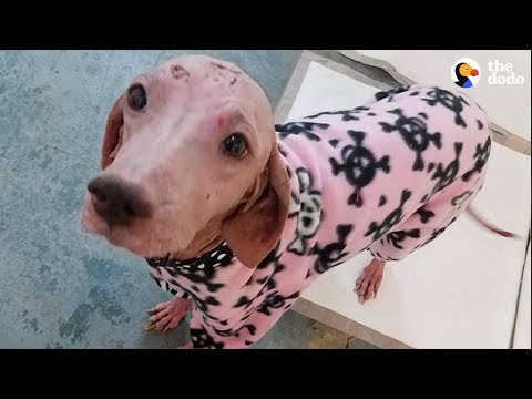 Quarantined With All My Pitbulls & Bullies - COVID (Official Caona Bully Video) from YouTube · Duration:  8 minutes 1 seconds
