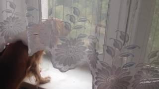 Дина смотрит в окно