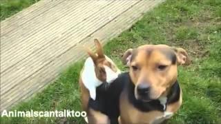 Животные тоже умеют говорить!Кролик и Собака