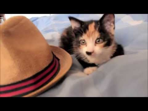 Buttercup the movie! My new Kitty (TRAILER)