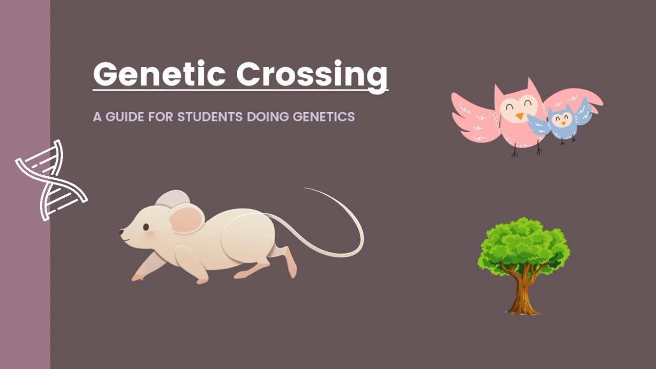 Mono-hybrid Examples | Biology | Determining Gender | Fur ...