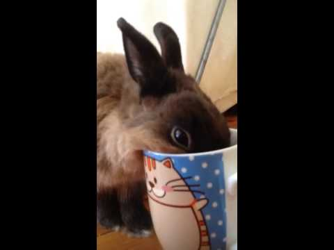 Lenny the bunny loves tea