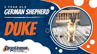 German Shepherd, Duke!  Off Leash K9 Training | Best Off Leash Dog Training Program