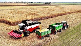Żniwa kukurydziane 2019 | Rostselmash ACROS 595+ | TEST wydajności i spalania | Capello | kukurydza