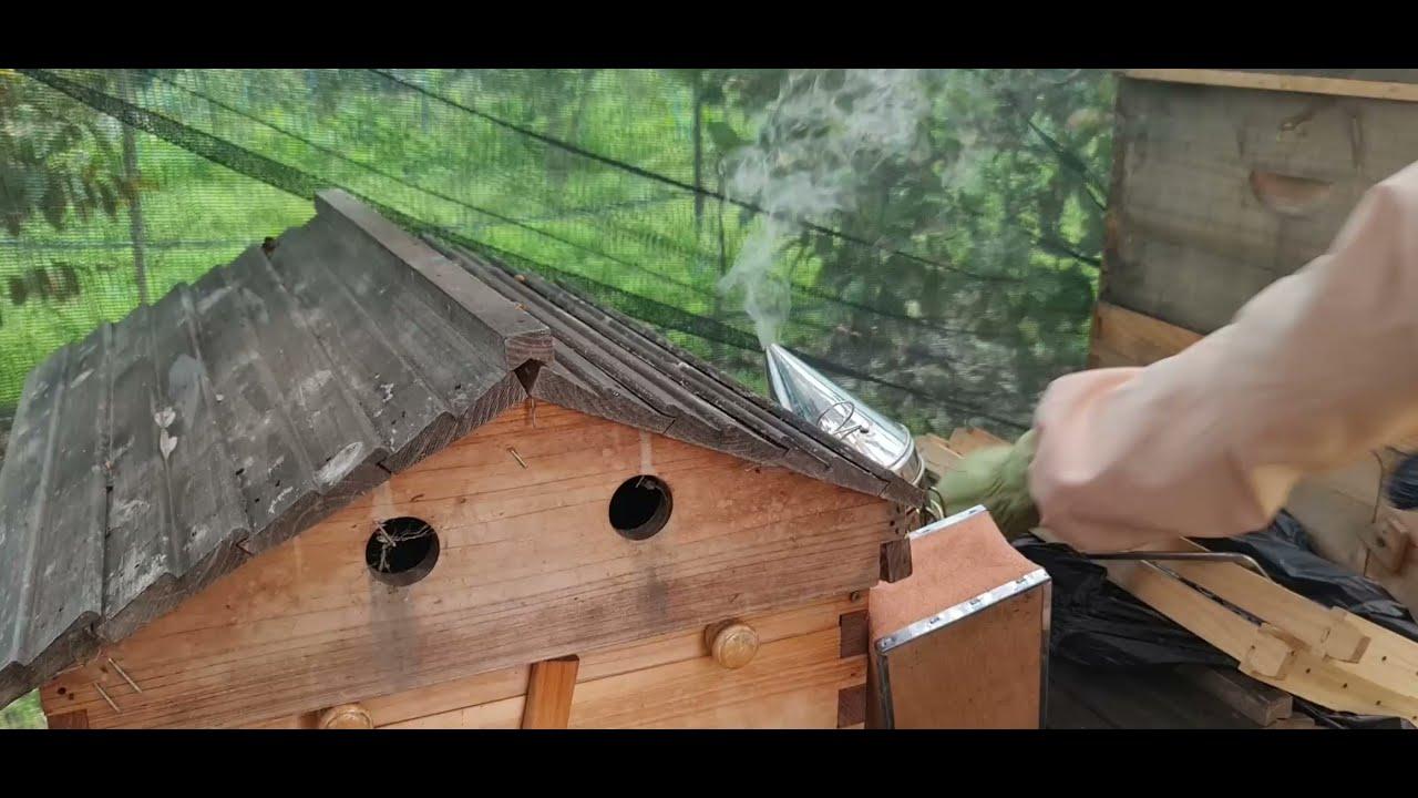 ?Honey Bees-Keeping