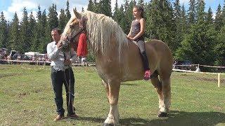 Concurs cu cai de frumusete - Marisel, Cluj 8 Iulie 2017