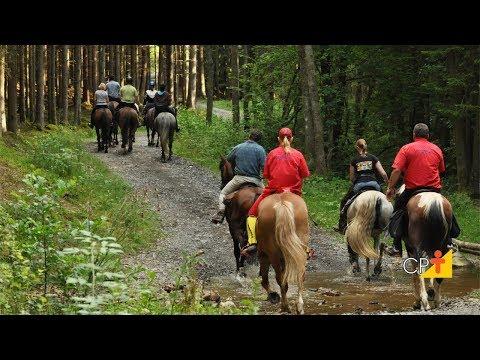 Clique e veja o vídeo Curso Qualificação de Profissionais Turismo Rural - Serviços Básicos