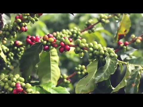 Salgar Coffee Farms: A Unique Investment Opportunity