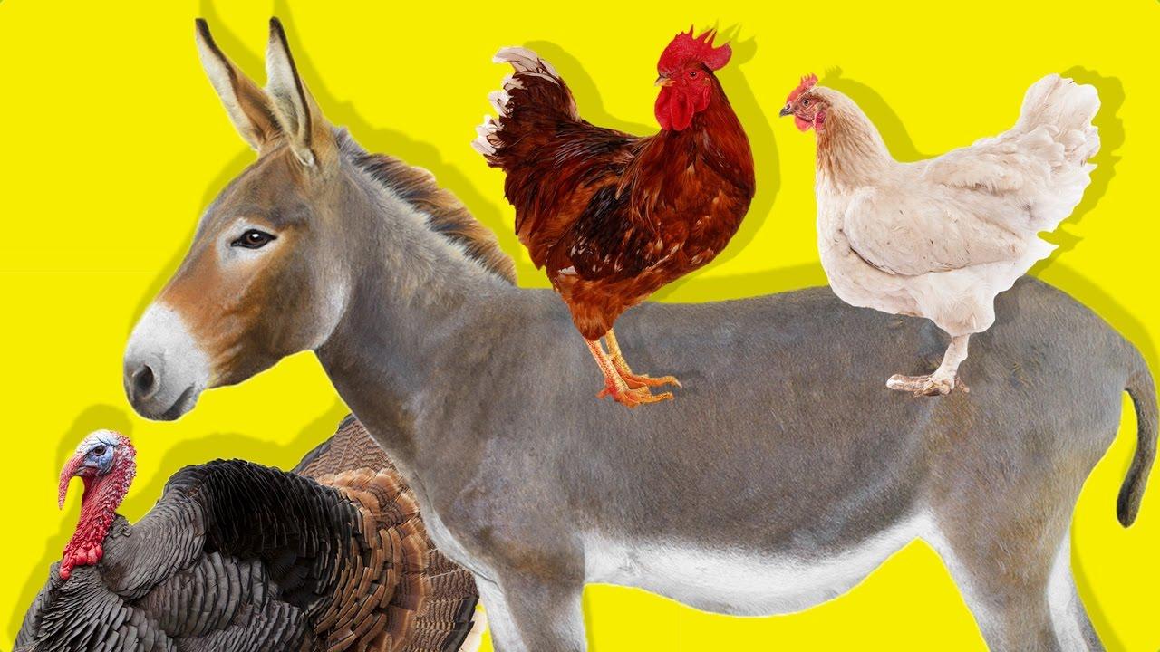 Çiftlik Hayvanlarını Öğreniyoruz | Çocuklar İçin Hayvanlar | Gerçek Hayvan Sesleri | Eğitici Video