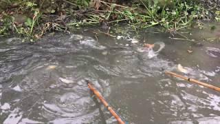 Mang Con 6 fet Mới Mua Quay Lại Tìm Ổ Cá Khủng Hôm Trước - Go back to find the fish