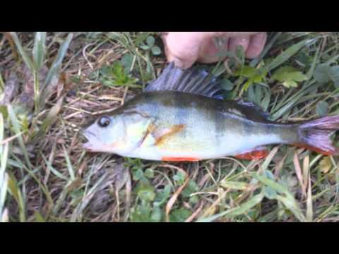 Gone Fishin'   Fishing the River Stour, Blandford, Dorset   episode 1   HD