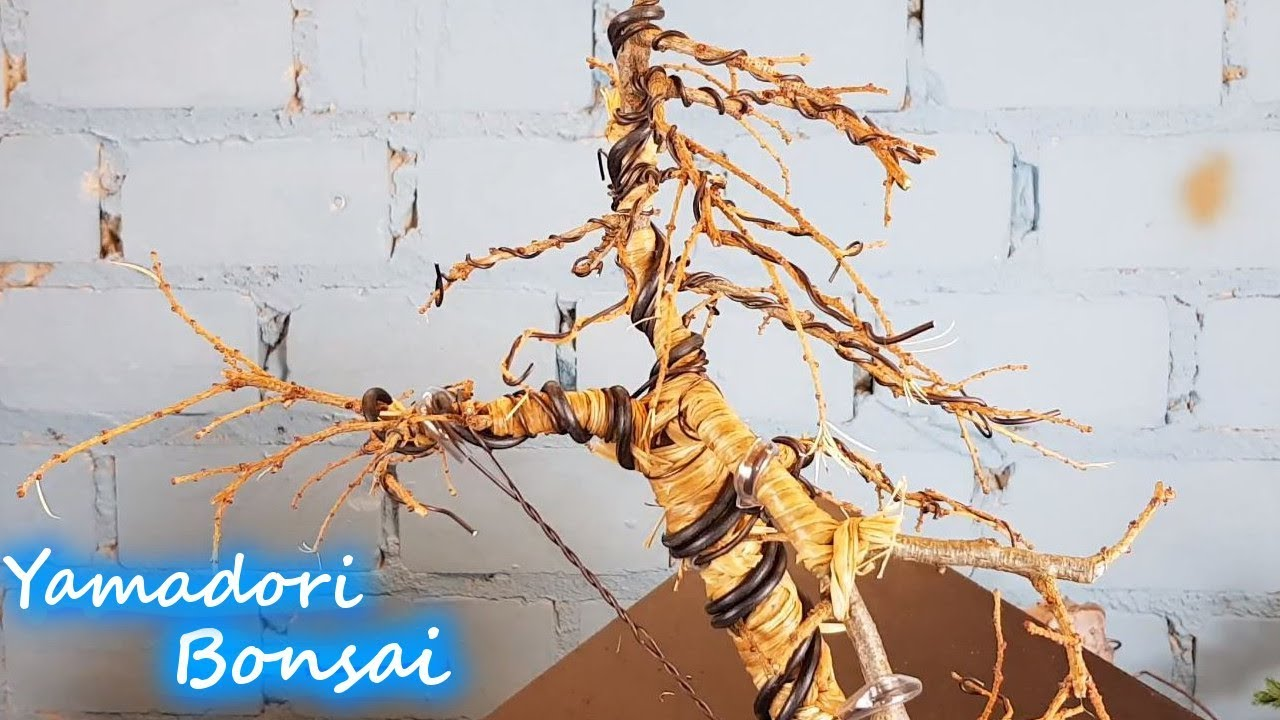 Bonsai Selber machen Die Yamadori Lärche - YouTube