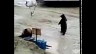 Дикие животные.  Медведи бомжи !
