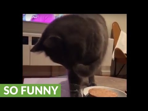 Sophisticated cat has peculiar method of drinking water