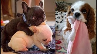 Cute baby animals Videos Compilation cute moment of the animals Cutest Animals #74