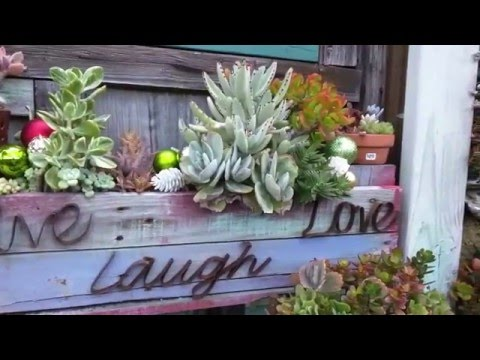Succulent Cafe | Oceanside Museum of Art | California | SoCal Day 7&8