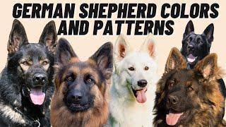 7 Different GERMAN SHEPHERD Coat Color Patterns