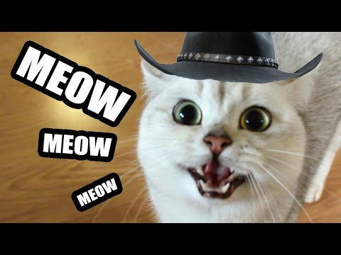 Lil Nas X - Old Town Road (Cat Vocal Cover)