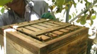 Repeat youtube video Taking honey from a traditional beehive in Japan PART1