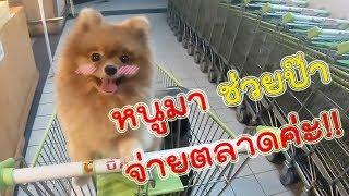 ดูแล้วจะยิ้มตาม! เมื่อพาหมาน้อยไปจ่ายตลาด ฮาๆ l ก็ผมมีลูกเป็นหมา EP.11