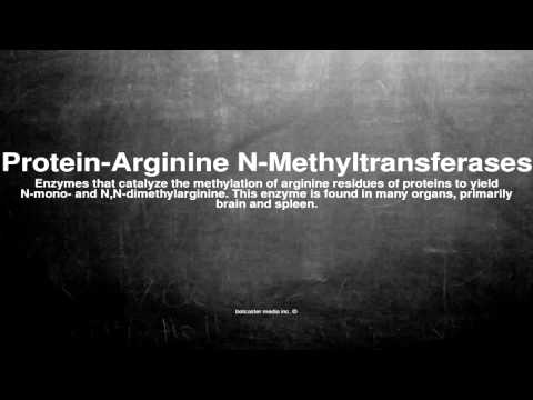 Medical vocabulary: What does Protein-Arginine N-Methyltransferases mean