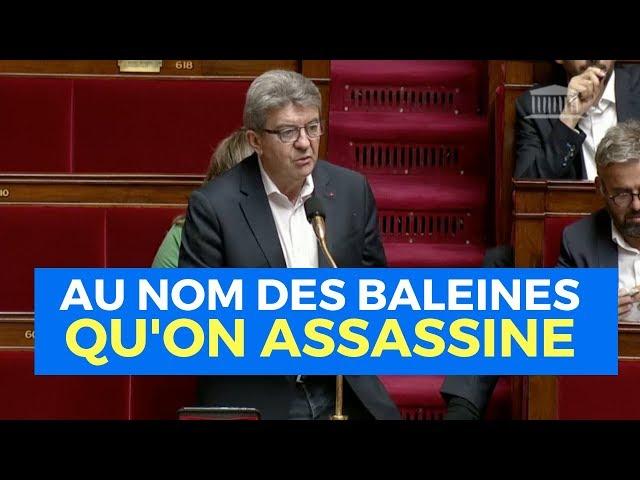 AU NOM DES BALEINES QU'ON ASSASSINE - Mélenchon