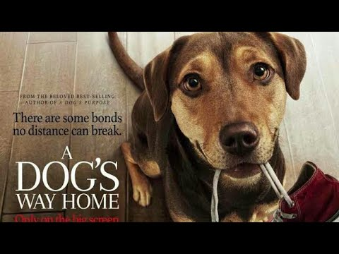 how-to-download-a-dogs-way-home-full-movie-in-hd-for-free