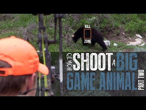 How To Shoot An Animal With A Bow Part 2 (Bow Hunting)