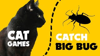 Games for cat ★ Catching BIG BUG on screen