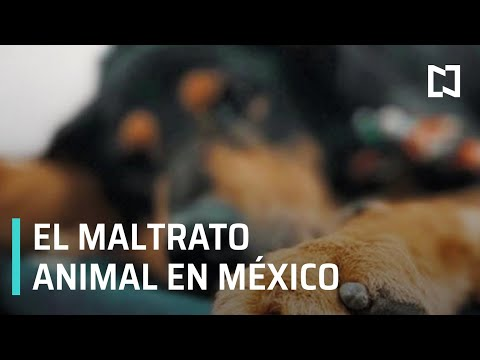 El maltrato animal en la agenda legislativa - Sábados de Foro