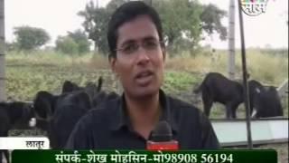 osmanabadi goat farm