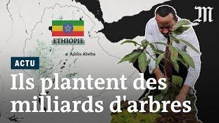 L'Ethiopie plante quatre milliards d'arbres en six mois