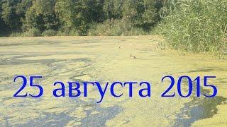 Домашнее видео, снятое телефоном. Озеро , август 2015(Мы с Юрочкой на пляже в конце лета кормим уточек, рыбок и лягушек., 2015-10-13T20:03:00.000Z)