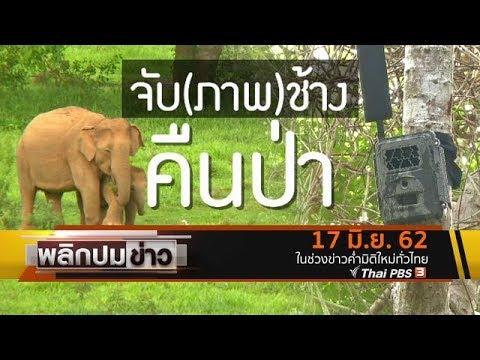 จับ(ภาพ)ช้างคืนป่า - วันที่ 17 Jun 2019
