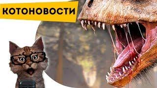 КОТОНОВОСТИ [1] Найден новый динозавр!