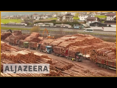 Timber Business 'booming' As Global Demand Soars