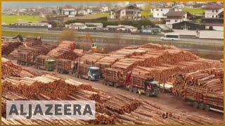 Timber business