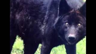 Cute Kawaii Wolf 1