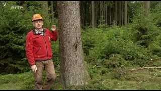 X:enius - Wald - Statt Monokultur zurück zur Natur?