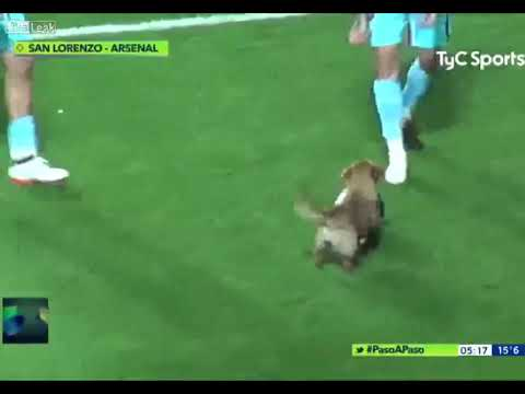 DOG INTERRUPTS SOCCER MATCH, SCORES POST-GAME INTERVIEW