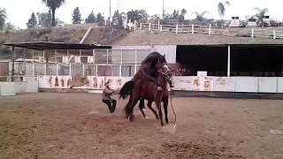 Quarter horse x Andaluz PART 1
