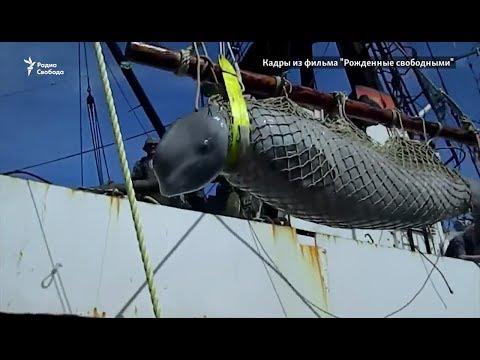 """Узники """"китовой тюрьмы"""""""