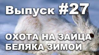 Выпуск 27: Охота зимой на зайца беляка онлайн видео 2013 часть 2