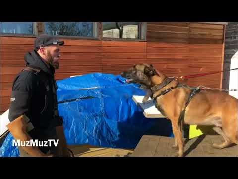 Security Dog Training UK