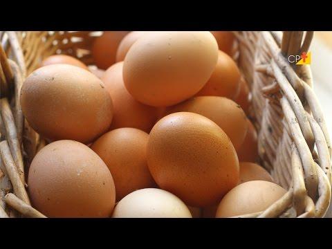 Manejo dos Ovos - Curso a Distância Criação de Frango e Galinha Caipira