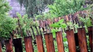 Птаха на даче(, 2012-07-14T15:49:32.000Z)